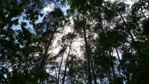 Снимок сделан против солнца - оно в центре. Автоматический режим HDR показал голубое небо и сохранил зеленую листву и хвою