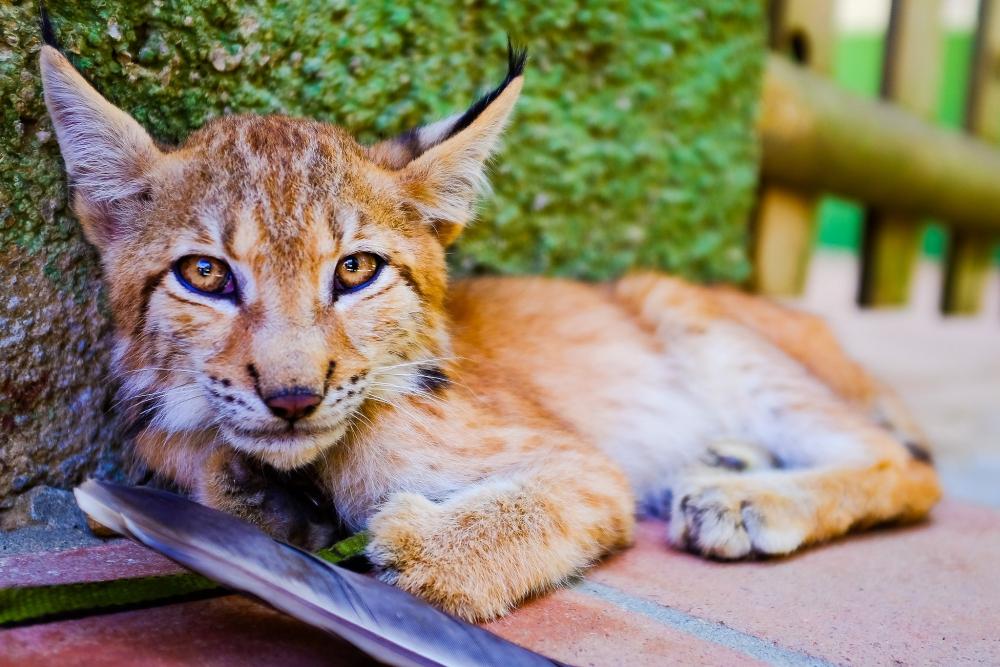 Как фотографировать животных: Чтобы получить хорошую фотографию с животным Вам порой придется лечь на землю.