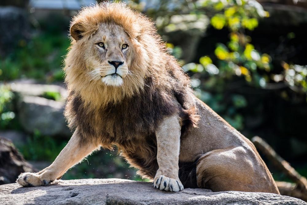 Как фотографировать животных: Правильный зум поможет вам «подойти» совсем близко.