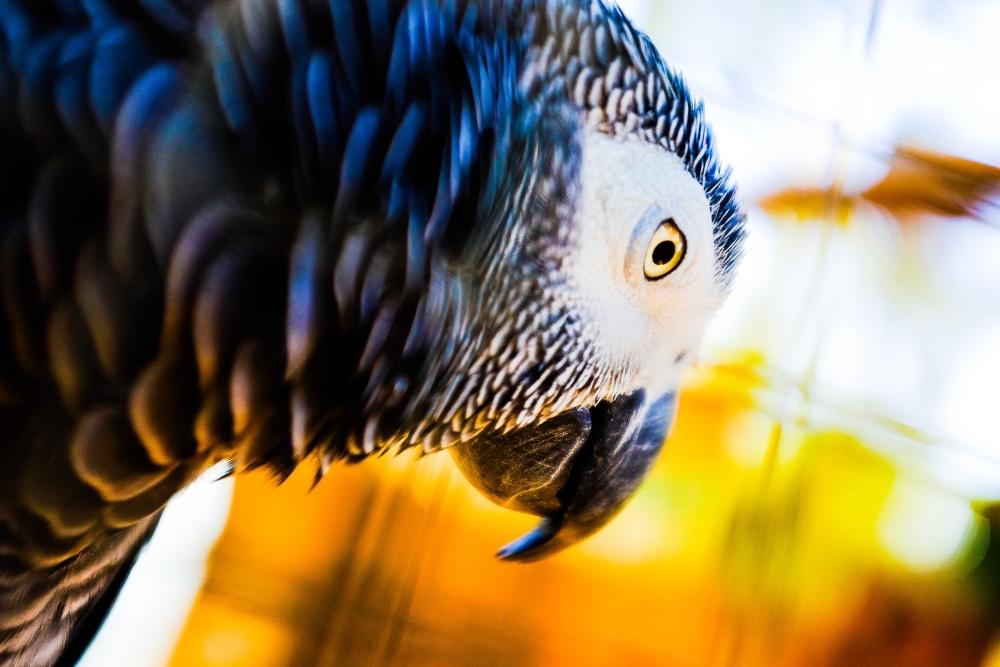 Как фотографировать животных: Чтобы получить яркие снимки, фотографируйте в формате RAW и расширяйте динамический диапазон в программе-конвертере Lightroom.