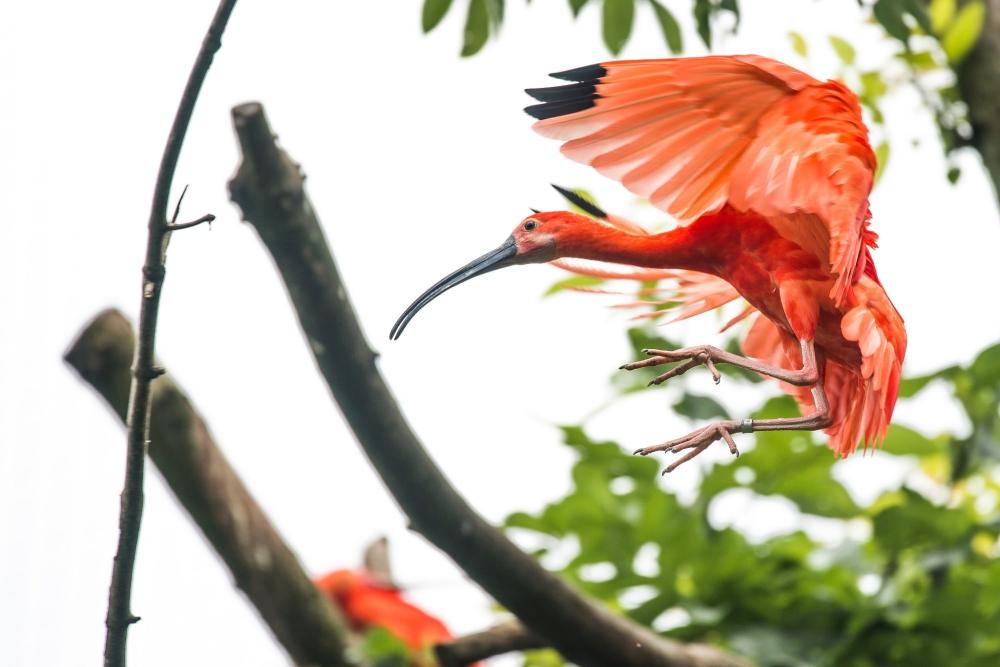 Как фотографировать животных: Используйте естественное окружение животного в качестве художественной рамки.