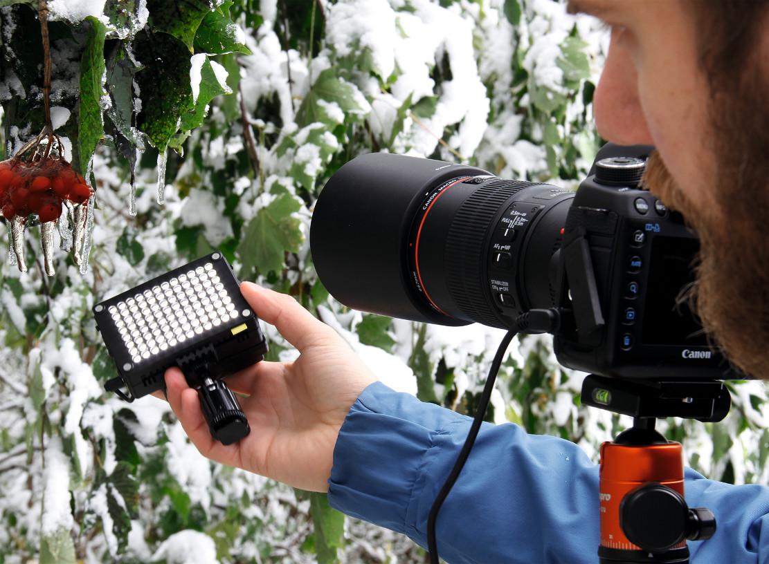 Как фотографировать цветы на цветущем дереве сегодня
