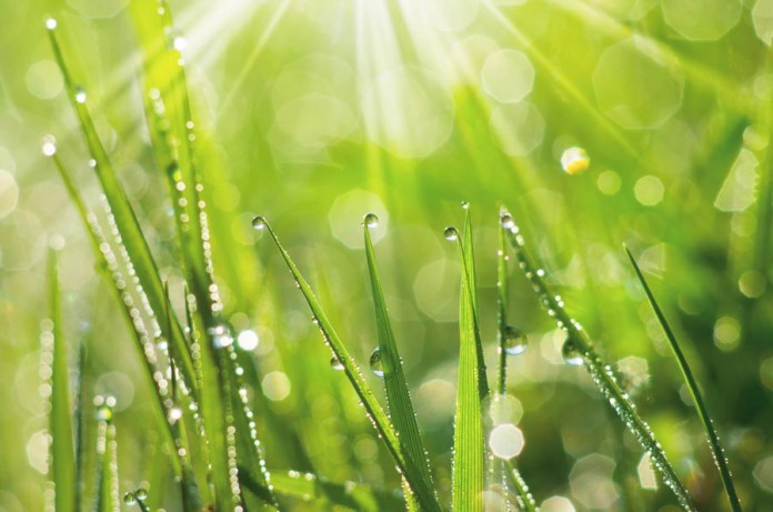 Фотографируем росу на траве
