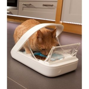 диетолог для кошки