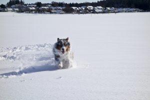 Оставляйте место: Собака выглядит более динамично благодаря свободному месту в кадре