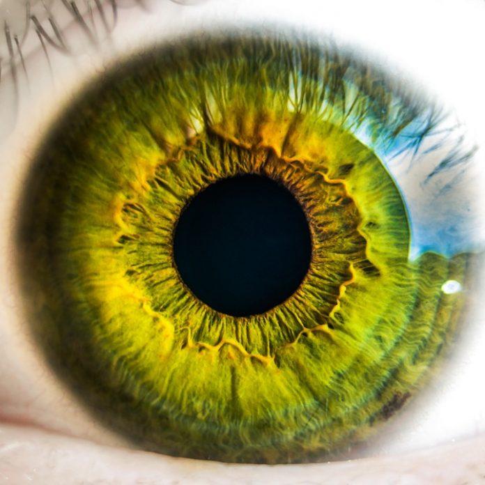 Перспективы биометрической идентификации: отпечатки пальцев, сканы сетчатки и распознавания лиц в банках и аэропортах