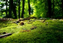 Приложения для определения растений