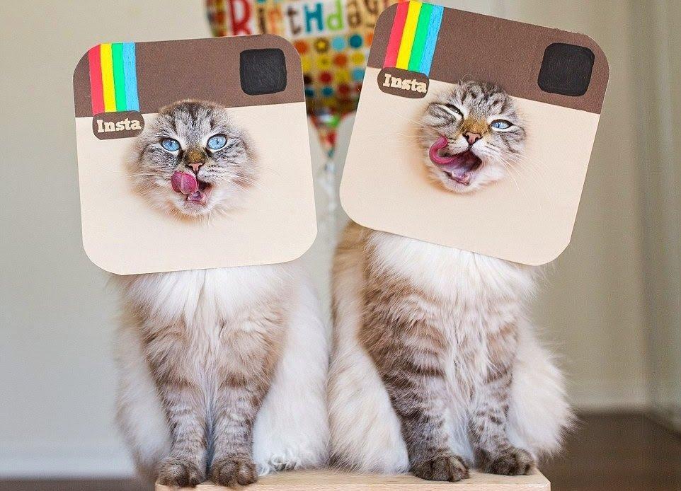 Как стать популярным в Instagram: хэштег лайк, хэштег подписка