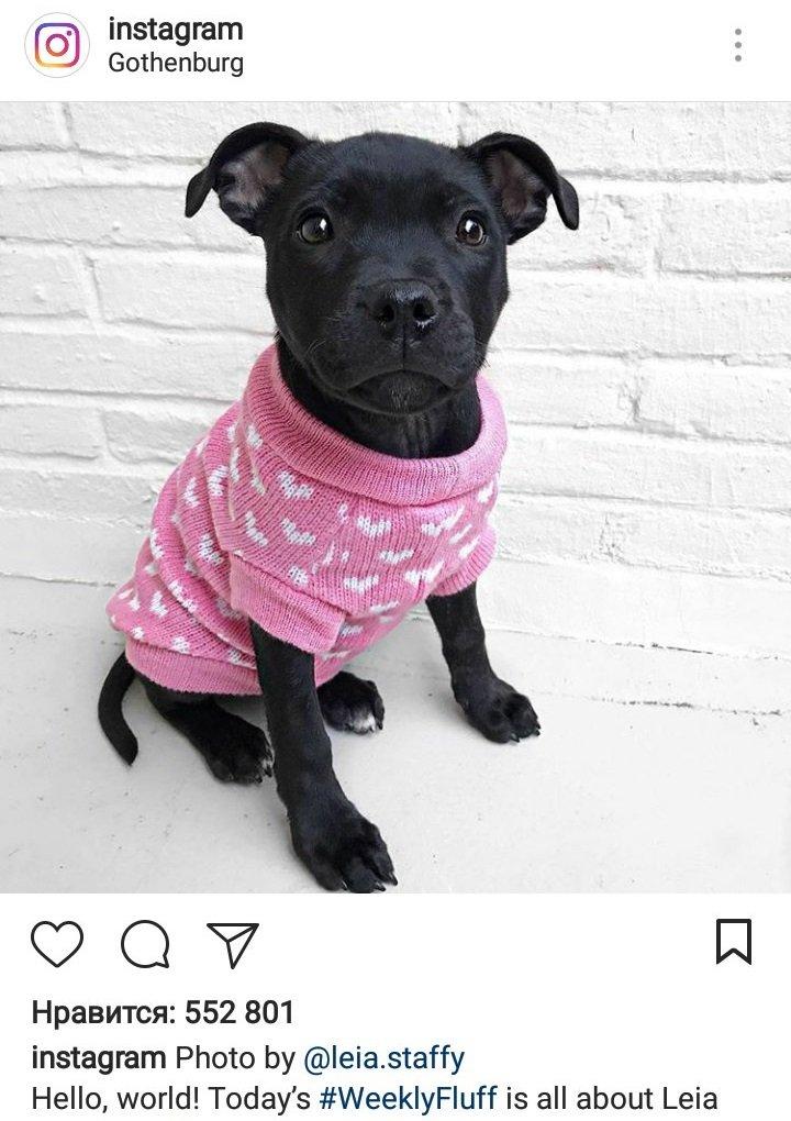 Даже Instagram постит в Инстаграм