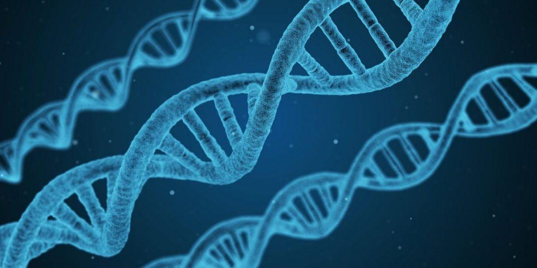 Ученые готовы к клонированию человека