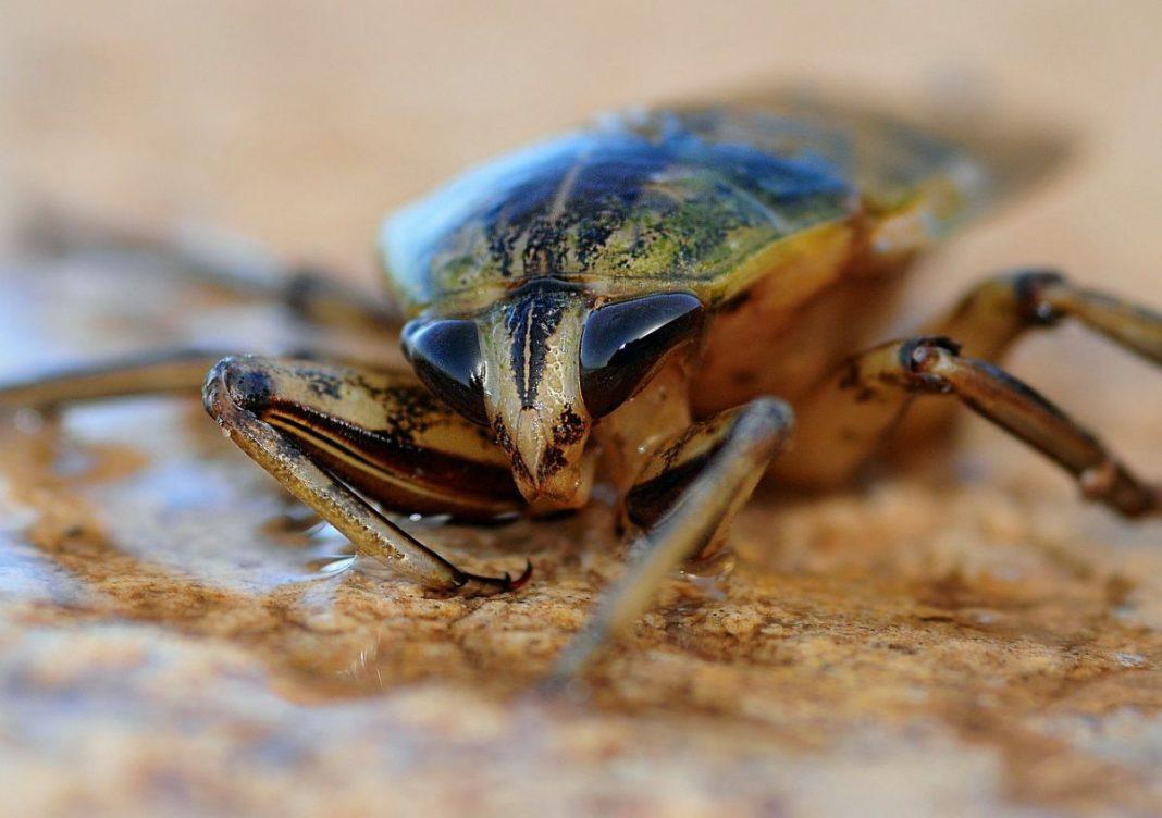 Создан первый в мире робот-таракан