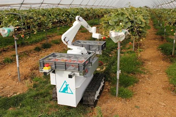 Роботы вместо рабочих: все на сбор клубники