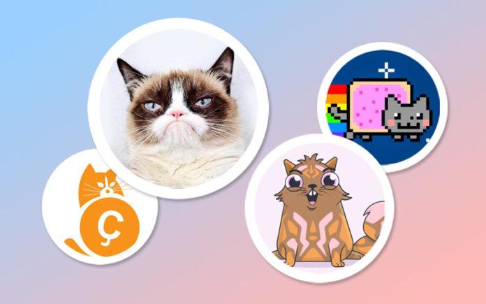 Мир, труд, мяу: как делают бизнес на котиках?