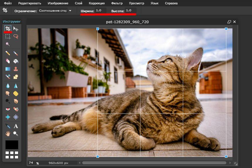 Как сделать круглое фото без фотошопа: 2 способа