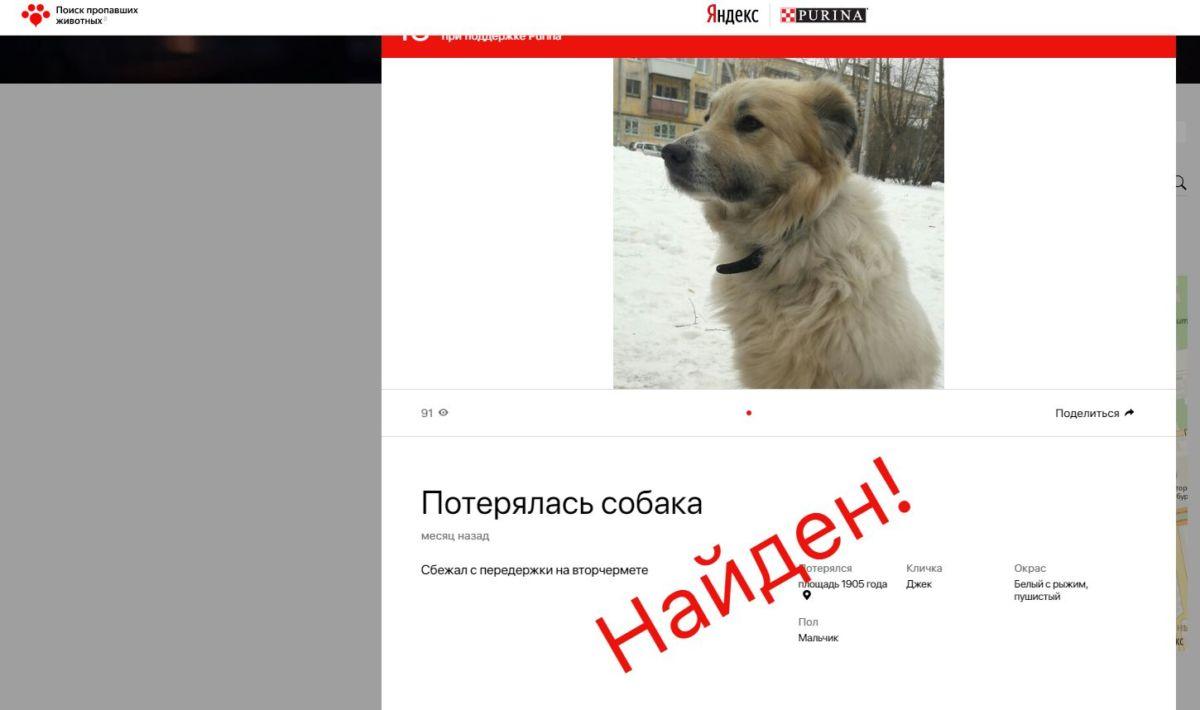 Потерялся кот или собака? Поищите в Яндексе (мы не шутим)