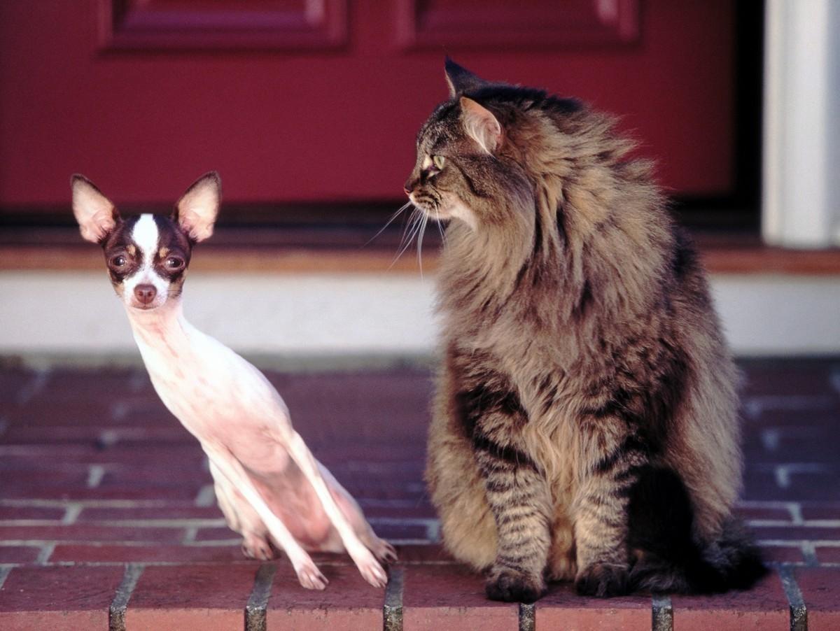 Я умею искать кота: выбираем трекер для животных