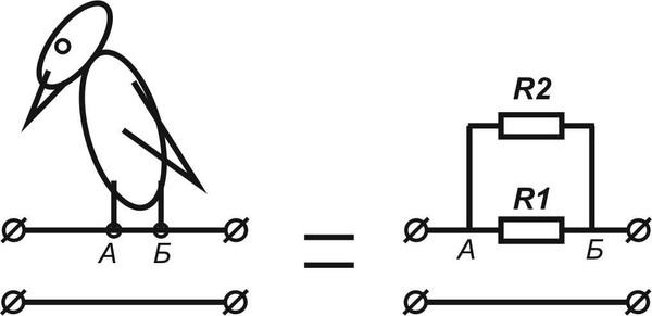 Почему птиц на проводах не бьет током: разбираемся в сути феномена