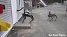 Реальные роботы-полицейские не на шутку перепугали общественность