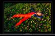 Apple представила первый ноутбук на базе собственного процессора - MacBook Air