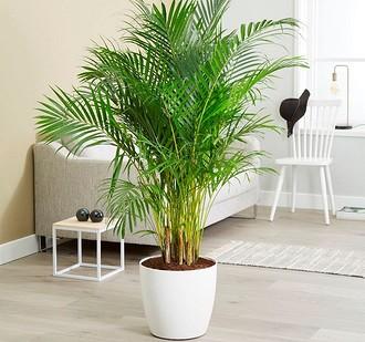 К растениям, которые обеспечив&...